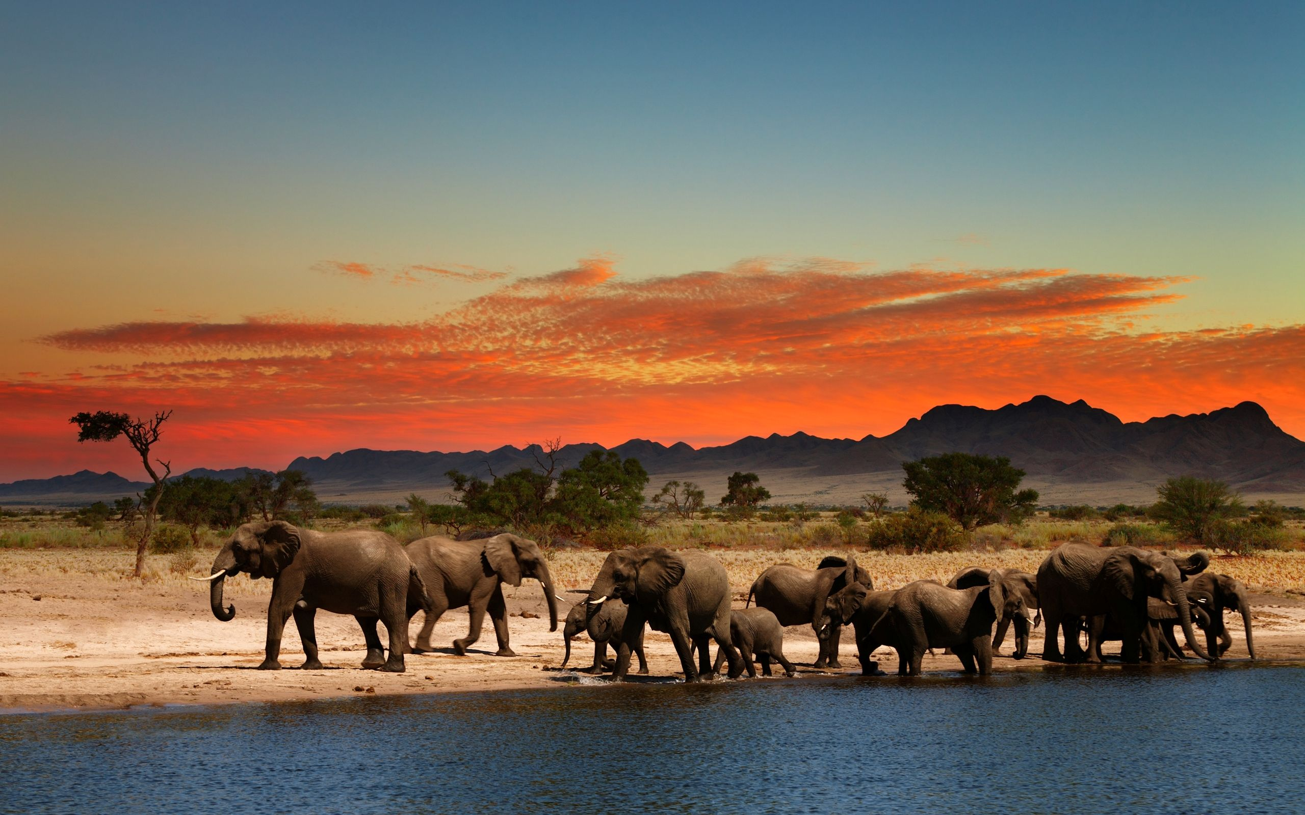 cute elephant wallpaper