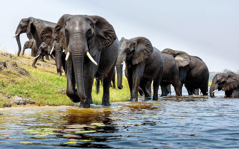 elephant images free