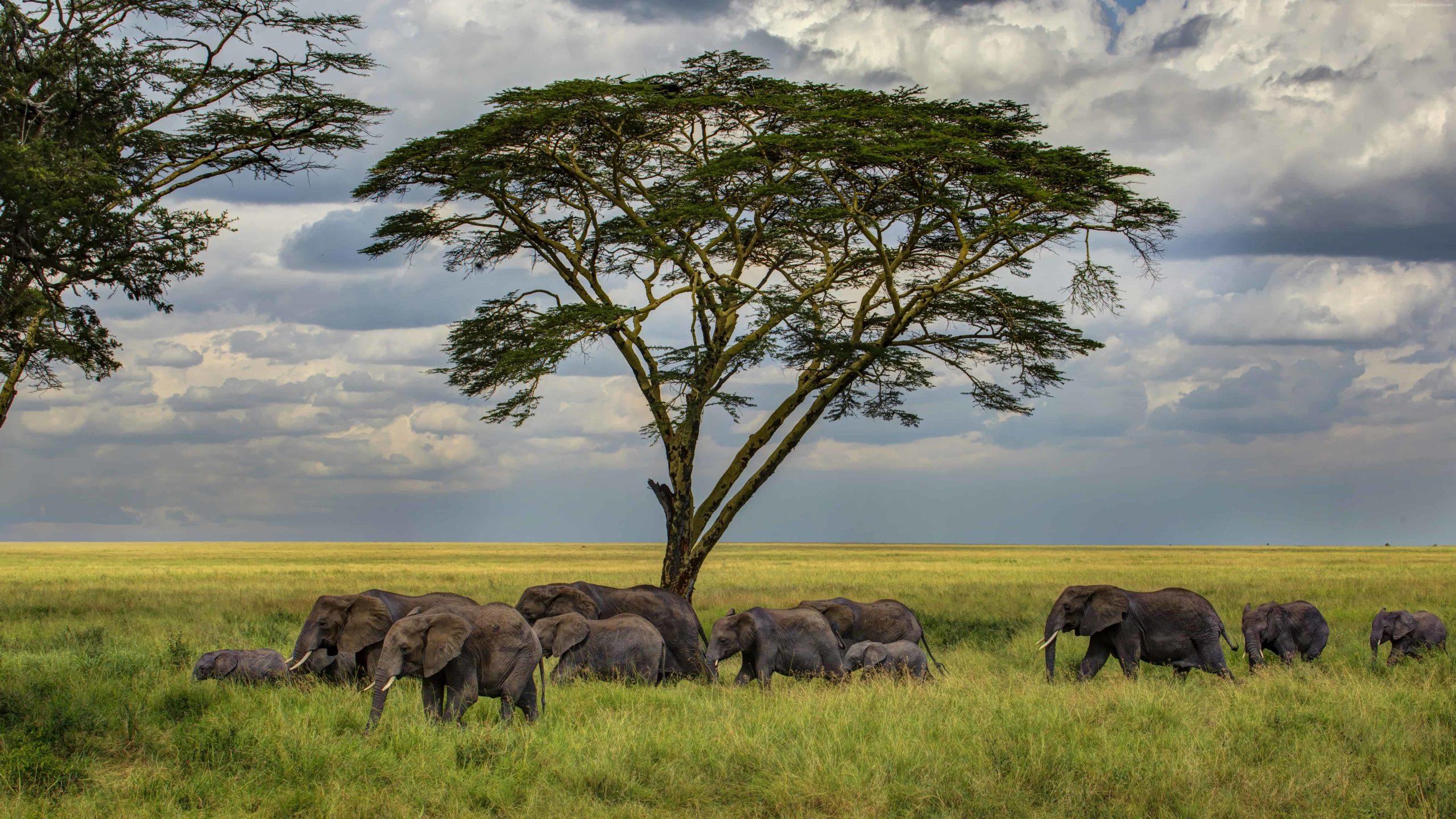 elephant wallpaper hd 1080p