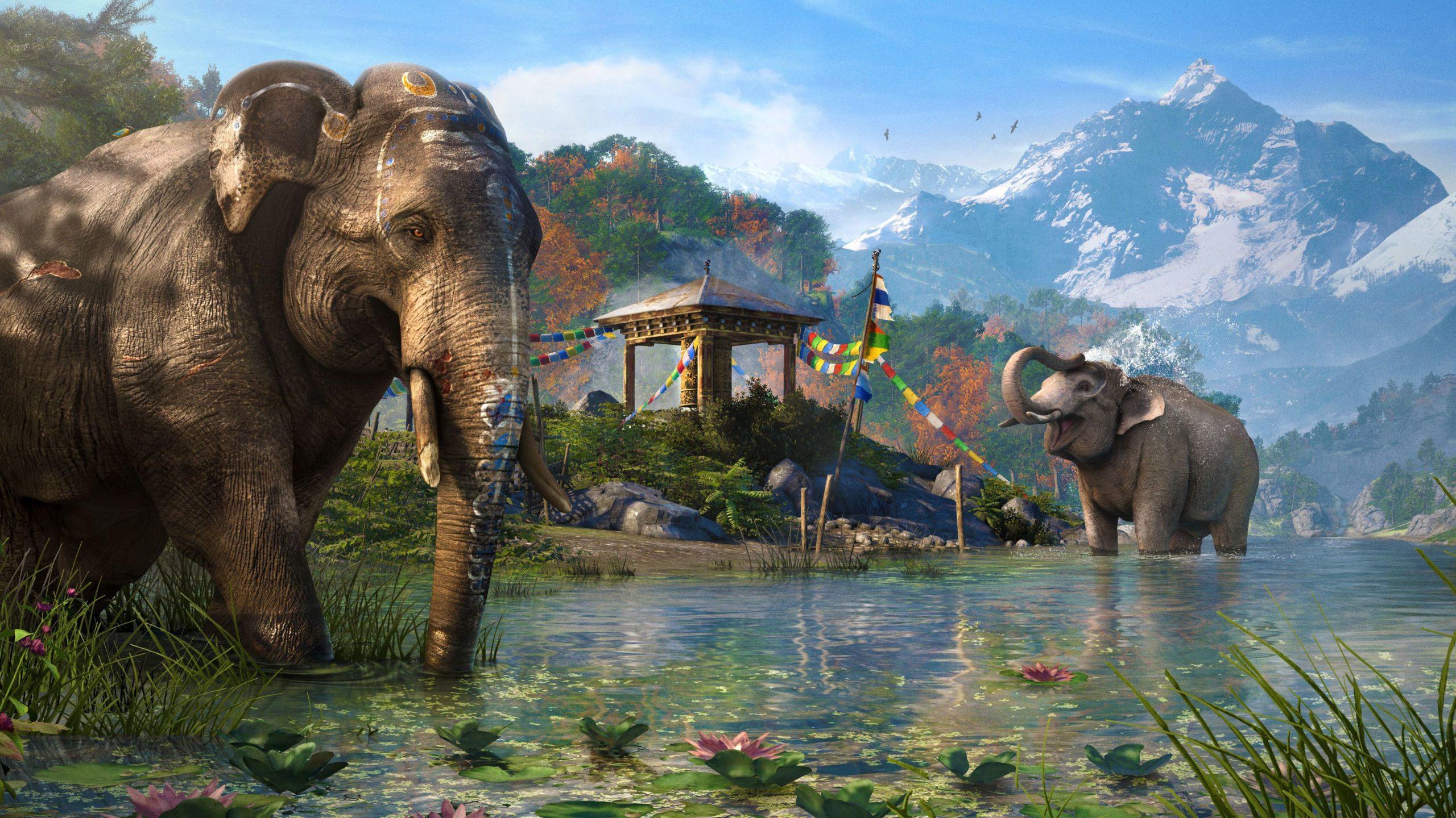elephant phone background