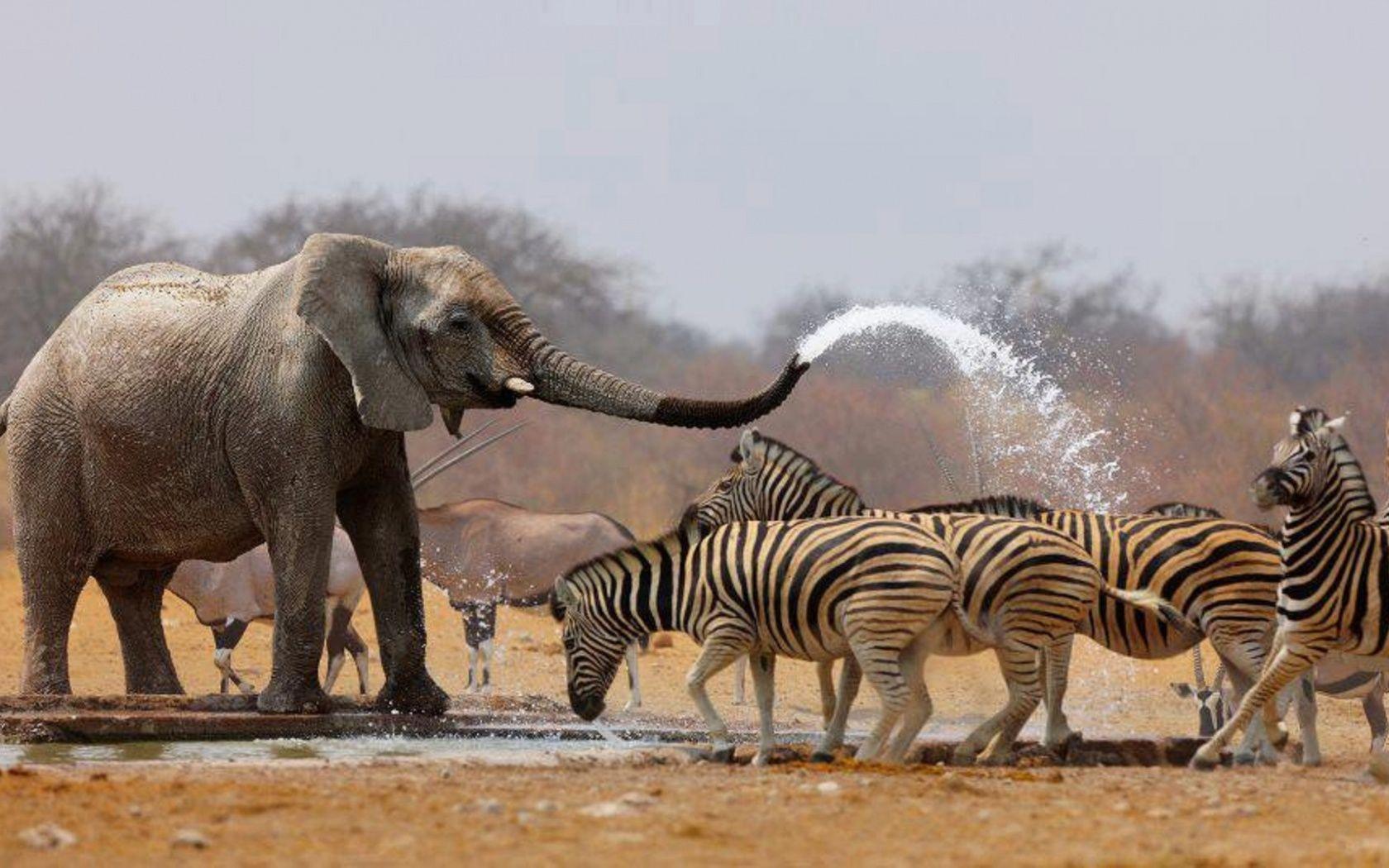 free elephant images
