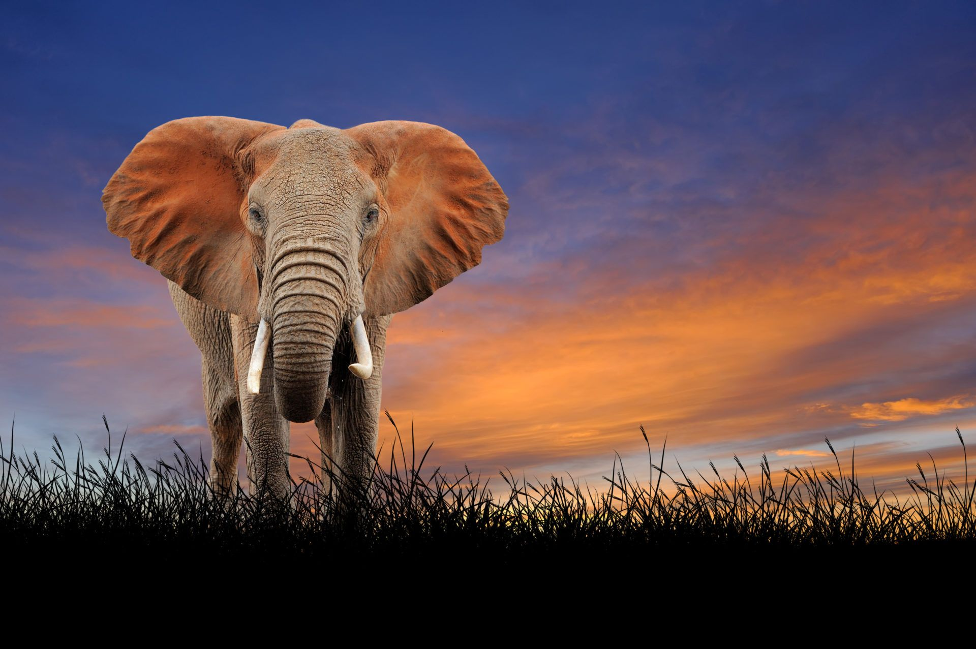 cool pictures of elephants