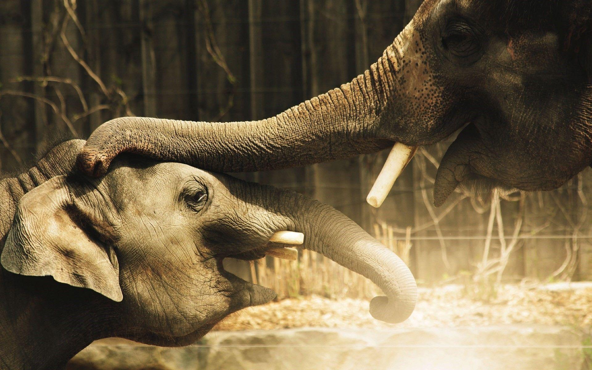 beautiful elephant pics