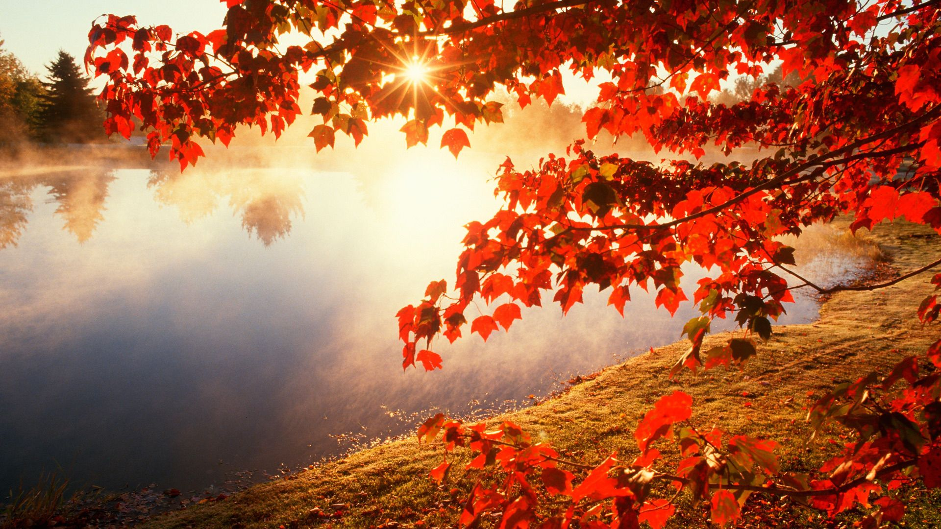 beautiful nature backgrounds for desktop