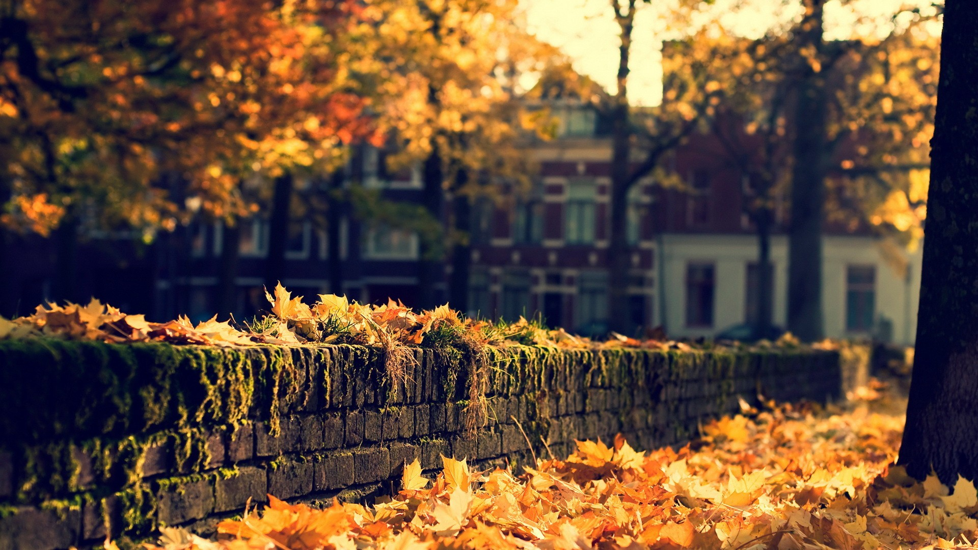 autumn nature wallpaper