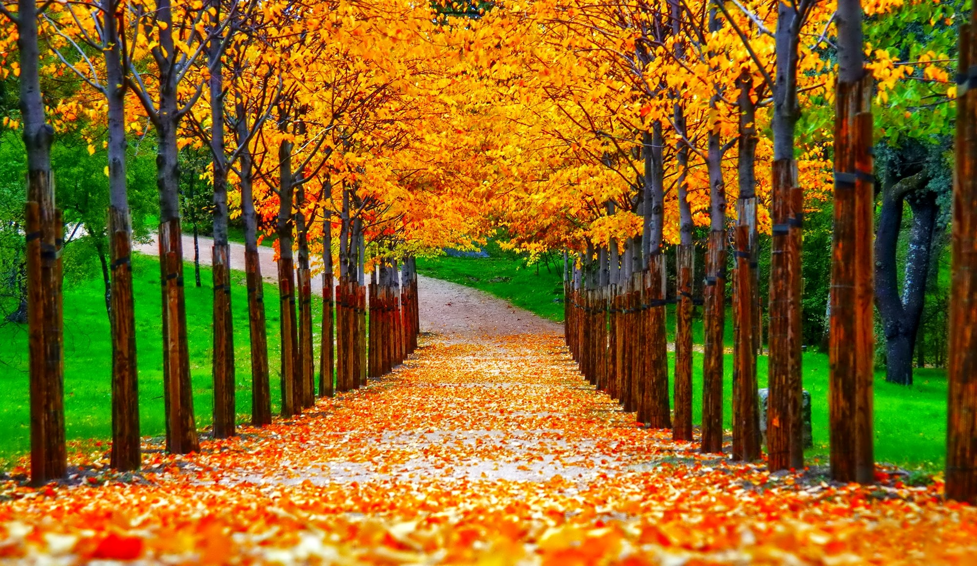 fall nature background pictures