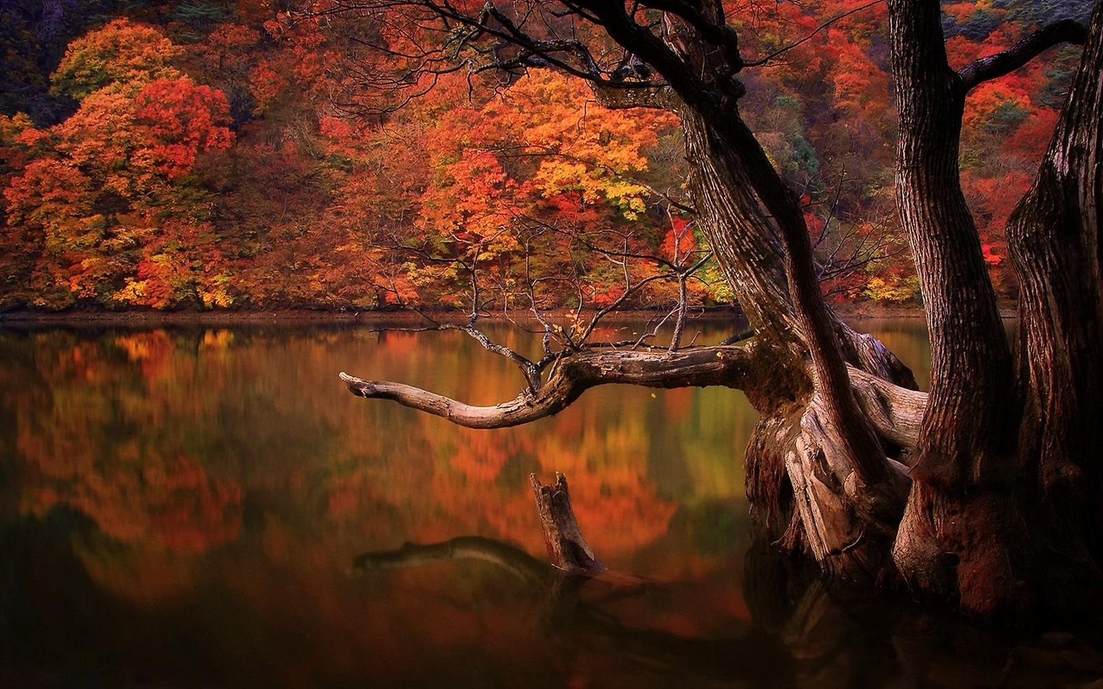 desktop wallpaper nature scenes