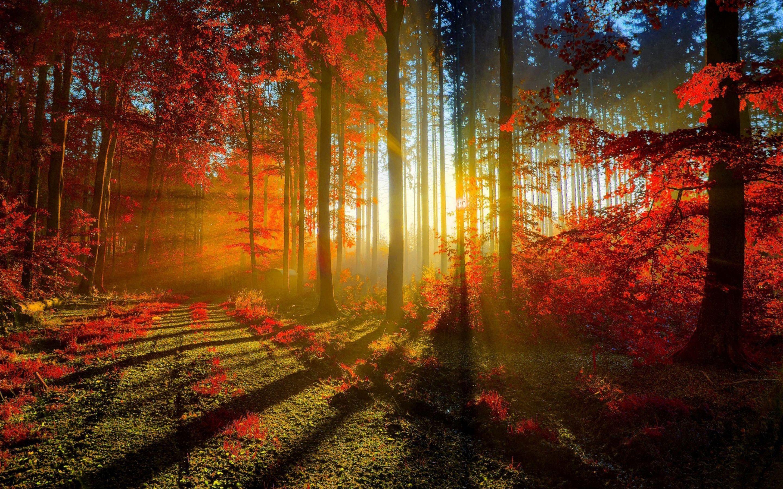 beautiful nature desktop wallpapers free download