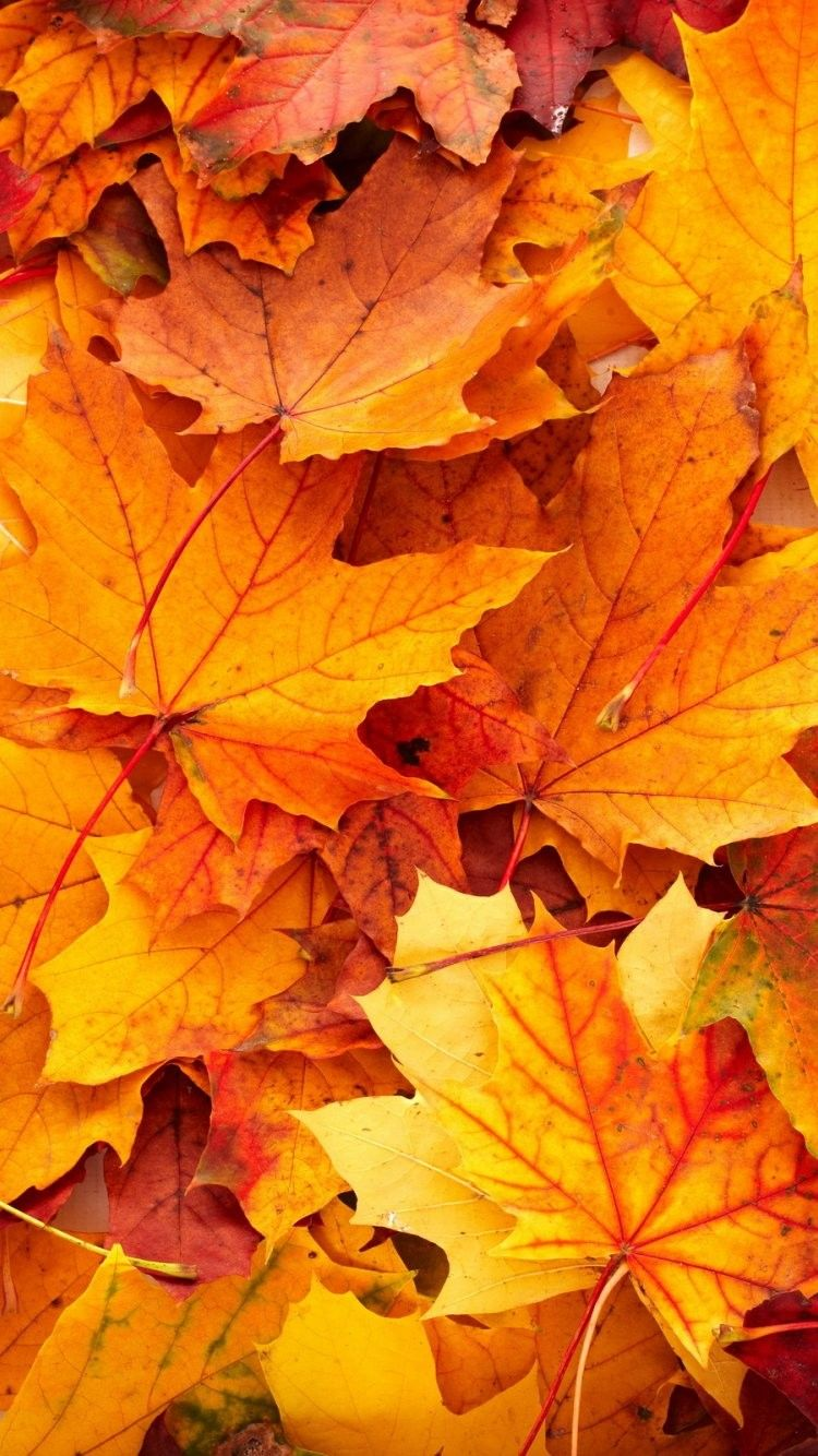 fall iphone 6 wallpaper, fall screensavers iphone