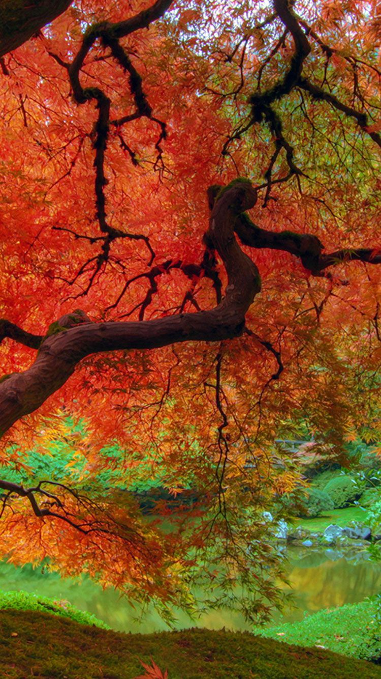 fall wallpapers iphone, fall leaves wallpaper for iphone