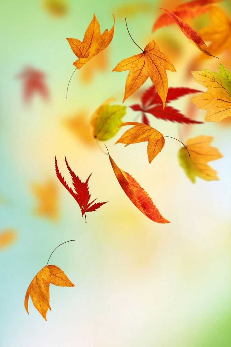 fall wallpaper for iphone, iphone 6 wallpaper fall