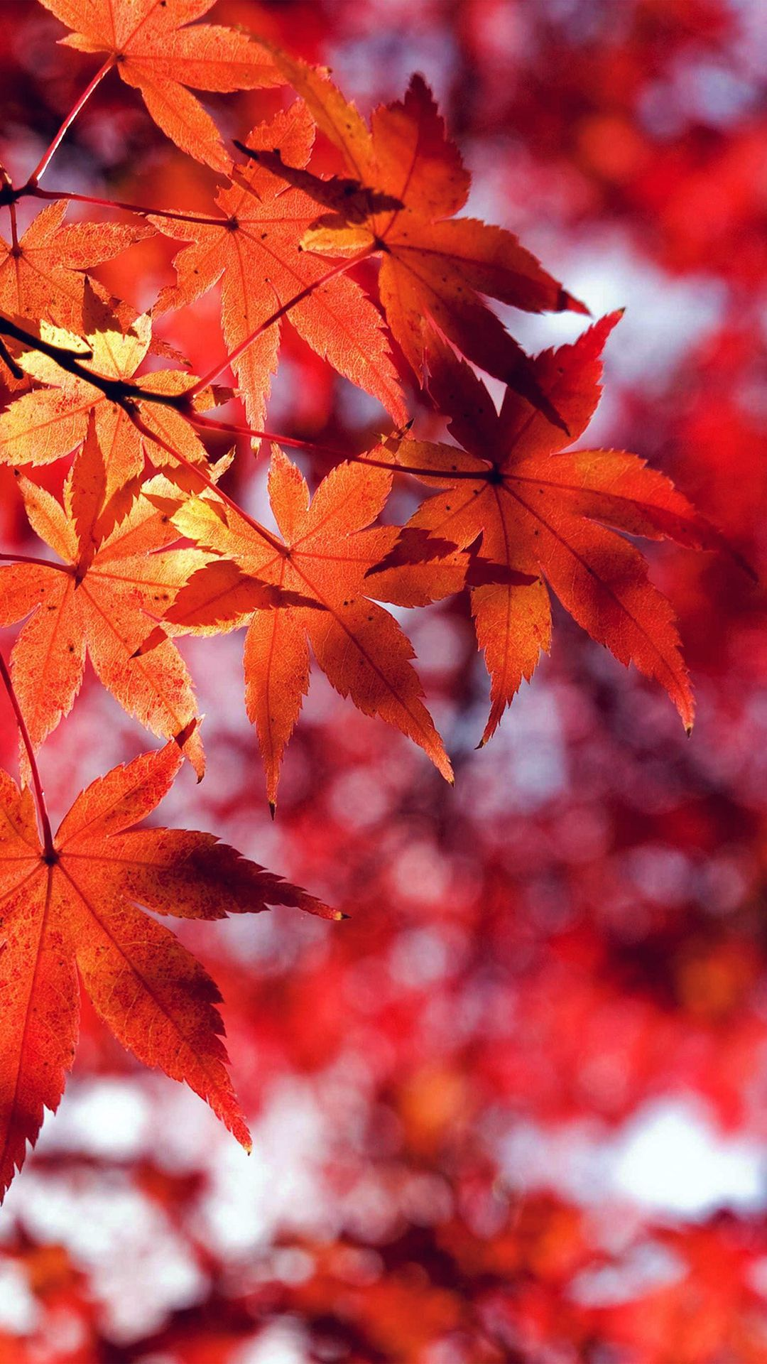 fall screensavers for iphone, iphone wallpaper autumn