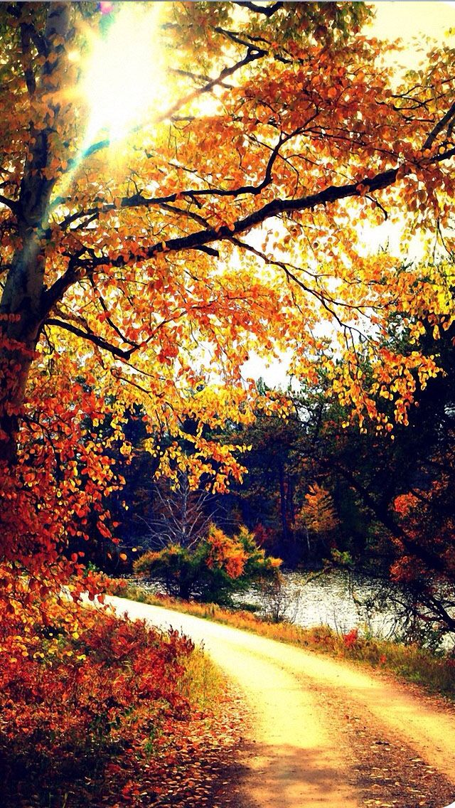 fall backgrounds iphone, fall iphone wallpaper hd