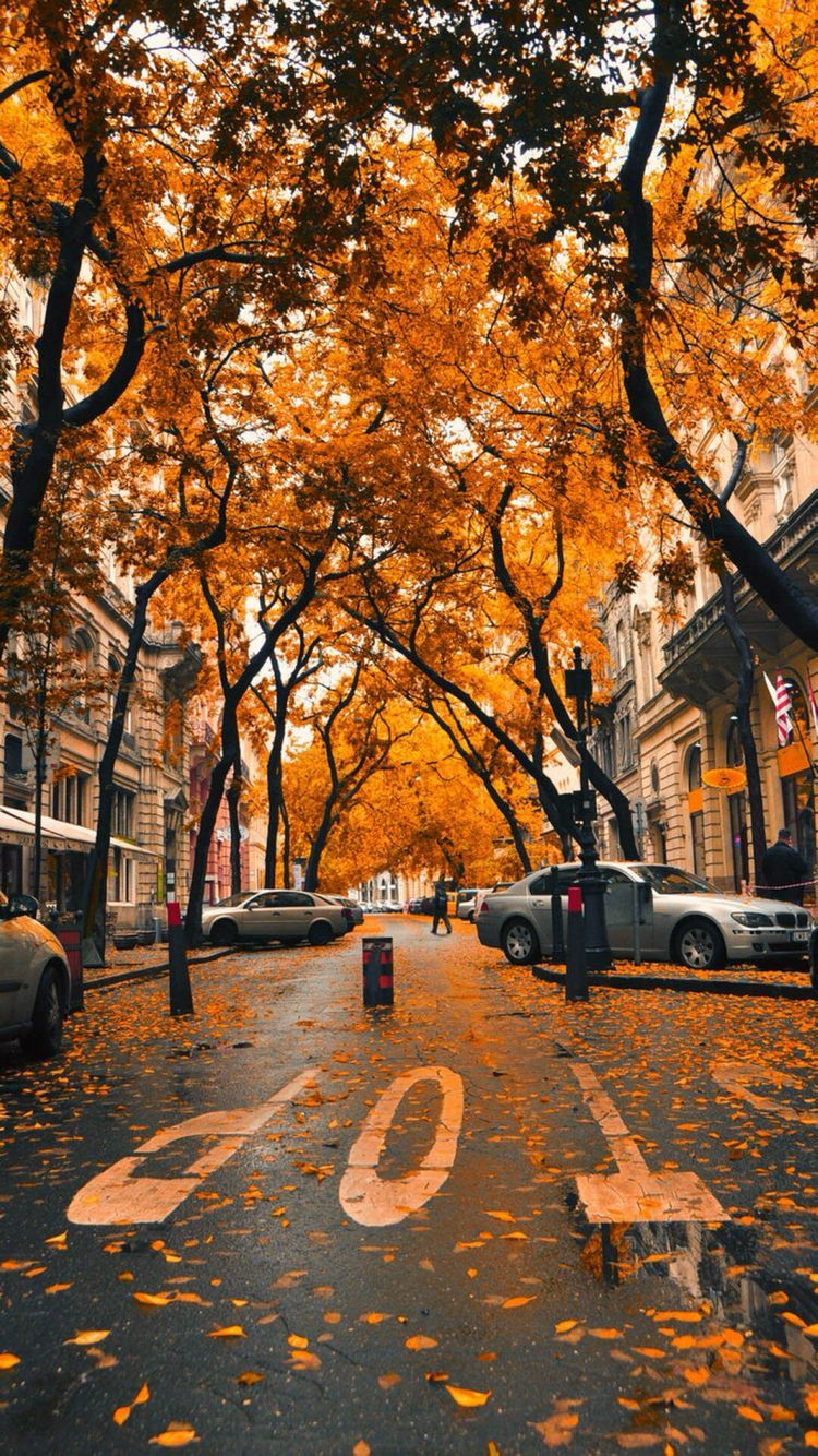 autumn wallpaper iphone, iphone background fall