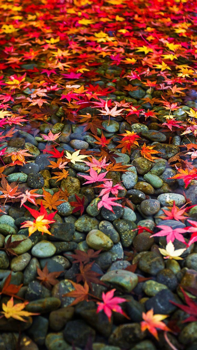fall wallpaper iphone 7, fall backgrounds for iphone