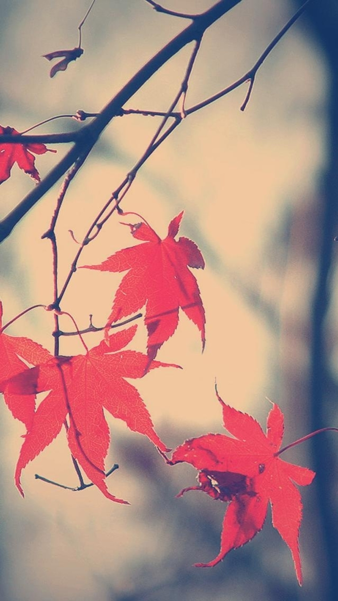 fall wallpapers iphone, autumn iphone background