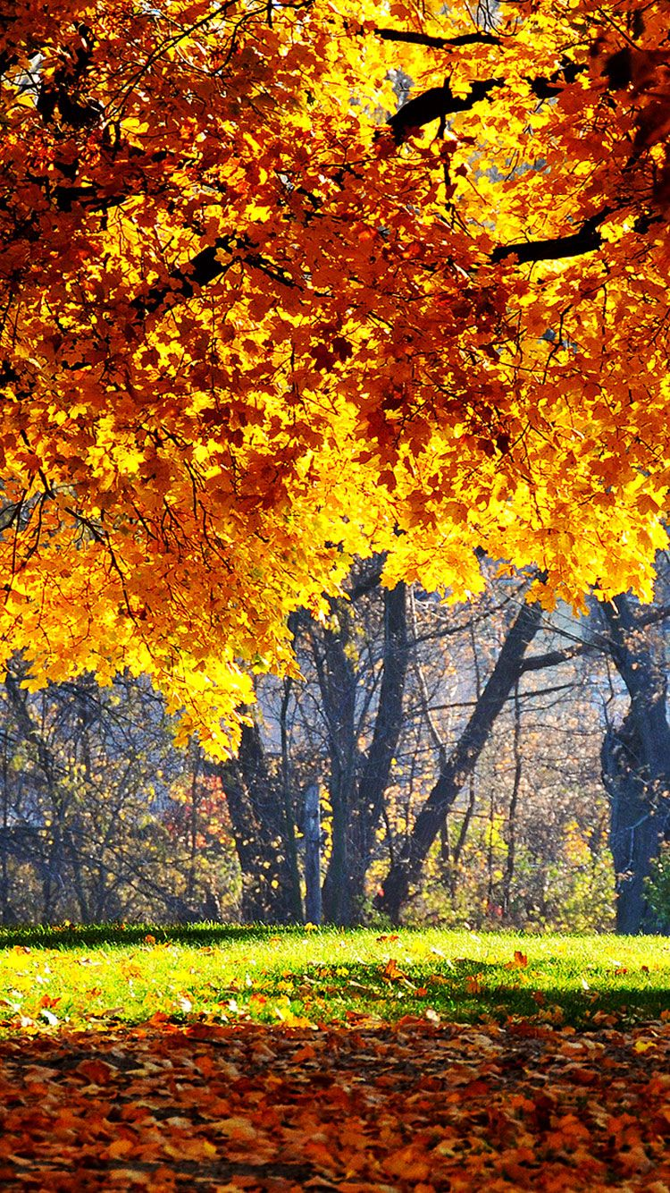 fall iphone backgrounds, fall wallpaper hd iphone