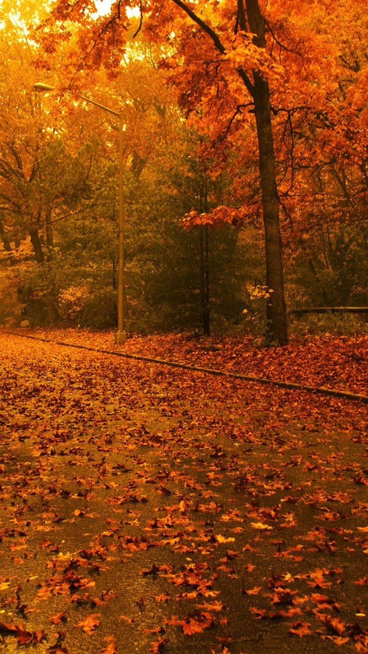iphone background fall, autumn wallpaper iphone