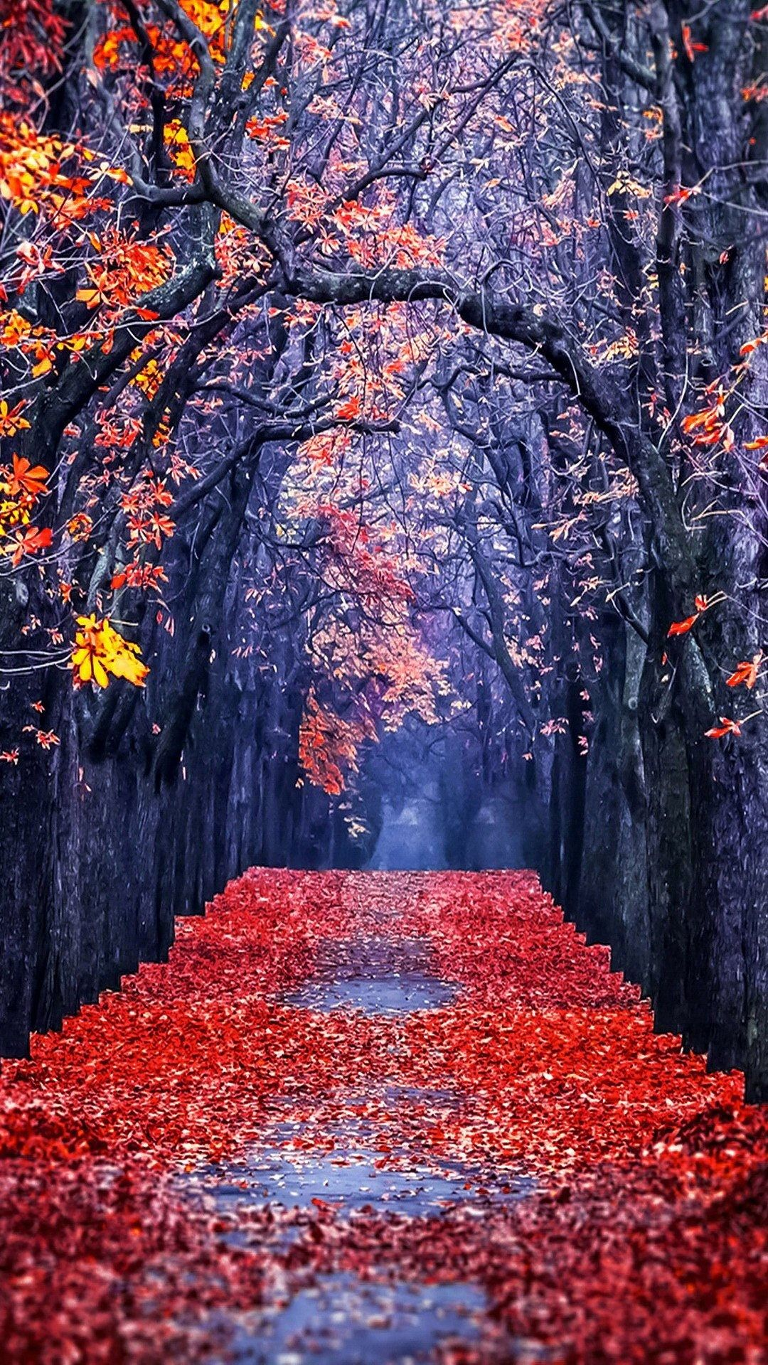fall wallpaper for iphone, fall wallpaper iphone