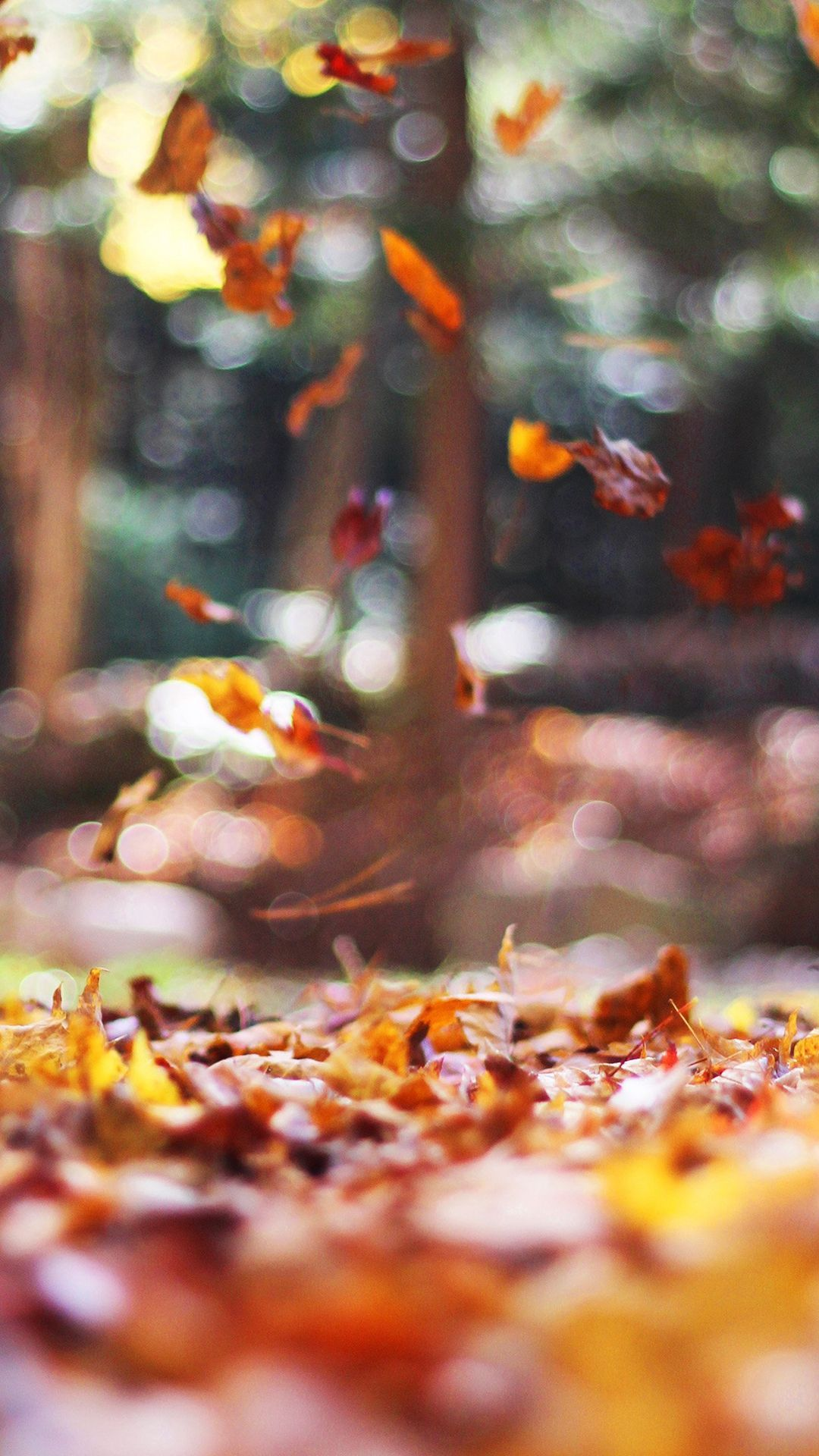 fall iphone background, fall iphone 5 wallpaper