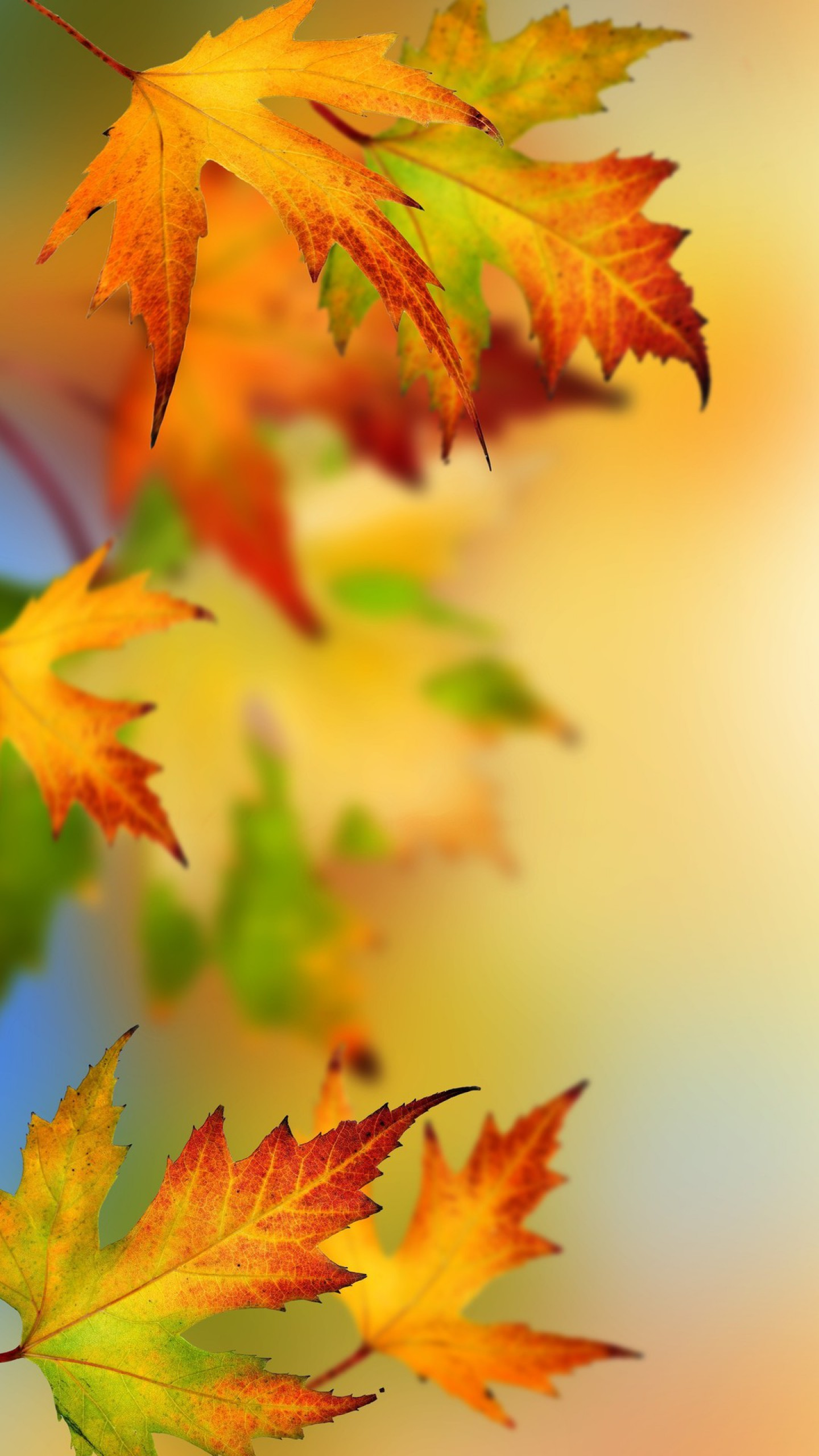 fall phone wallpaper, autumn iphone wallpaper