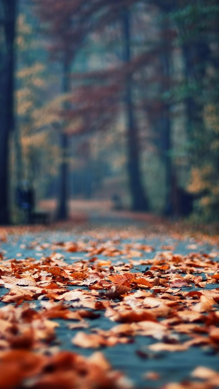 fall leaves wallpaper for iphone, wallpaper for iphone fall