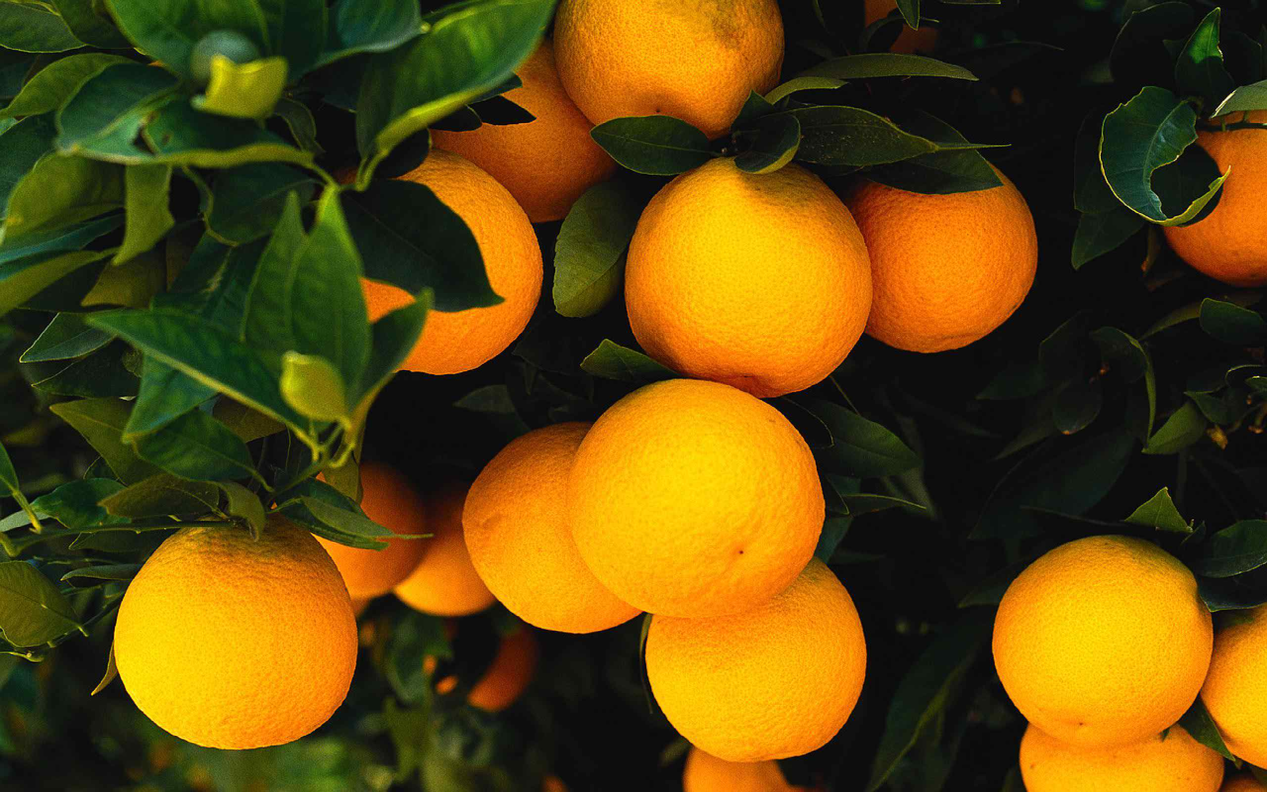 fruits hd wallpapers