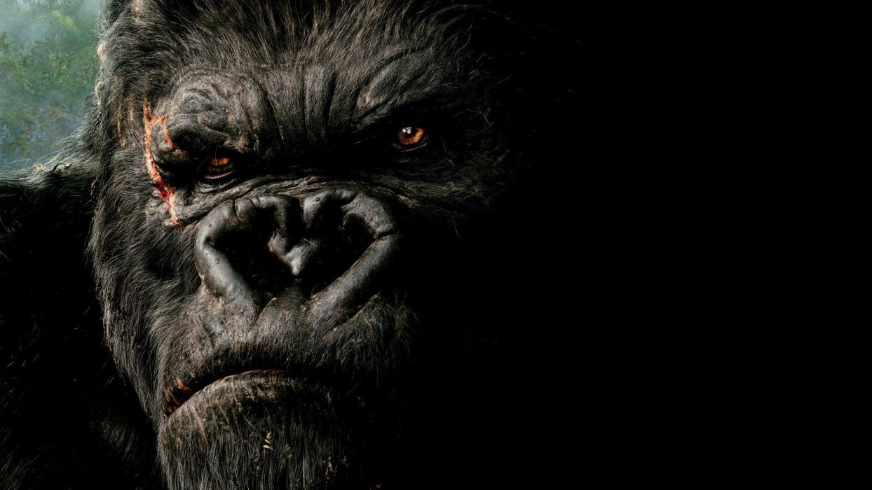 gorilla wallpapers 4k, gorilla photography