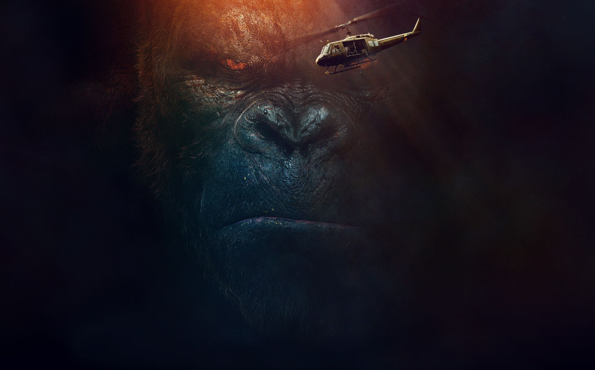 hd gorilla wallpapers, pics of apes