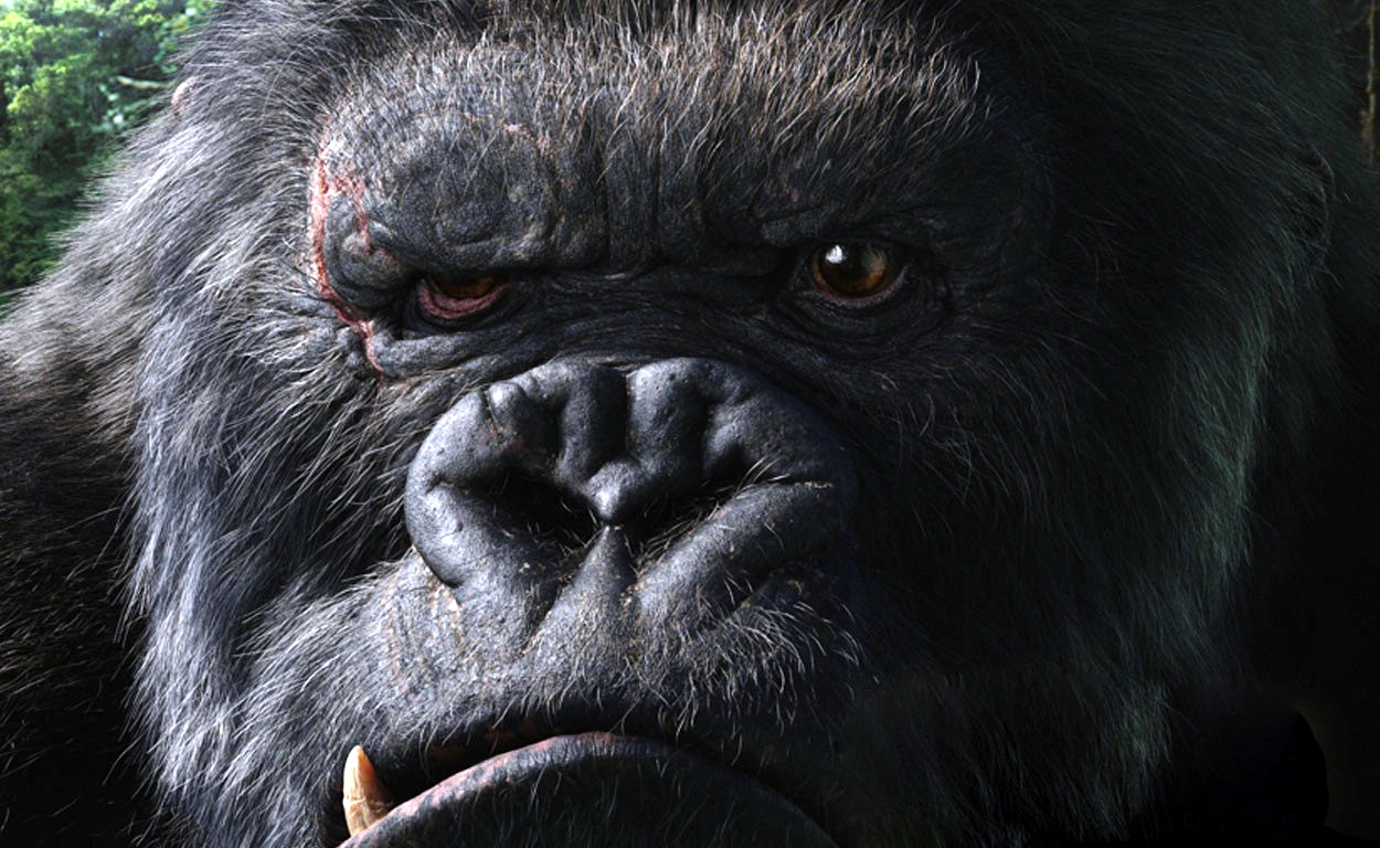 free 4k gorilla wallpapers, gorill