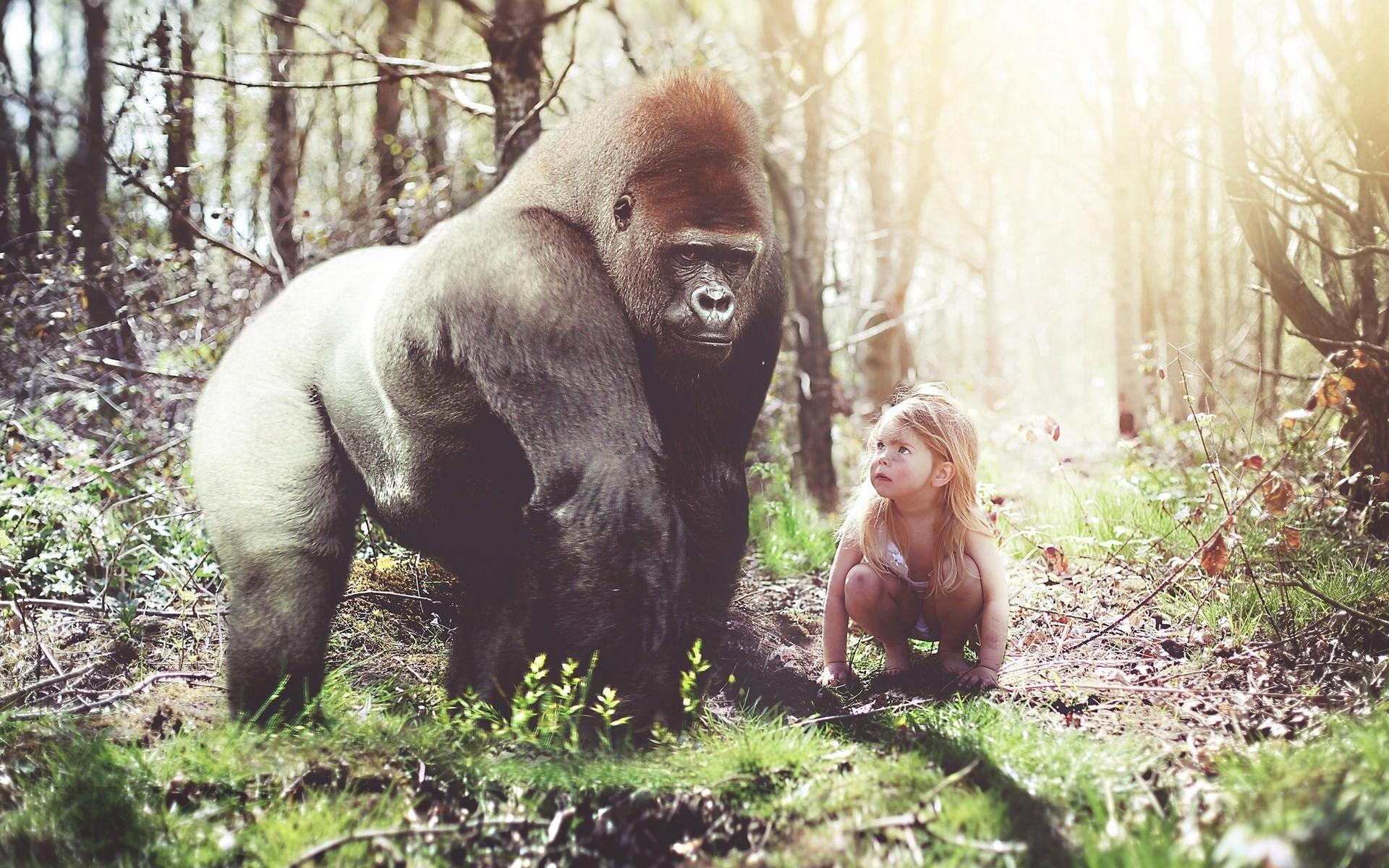 gorilla monkey images, silverback gorilla