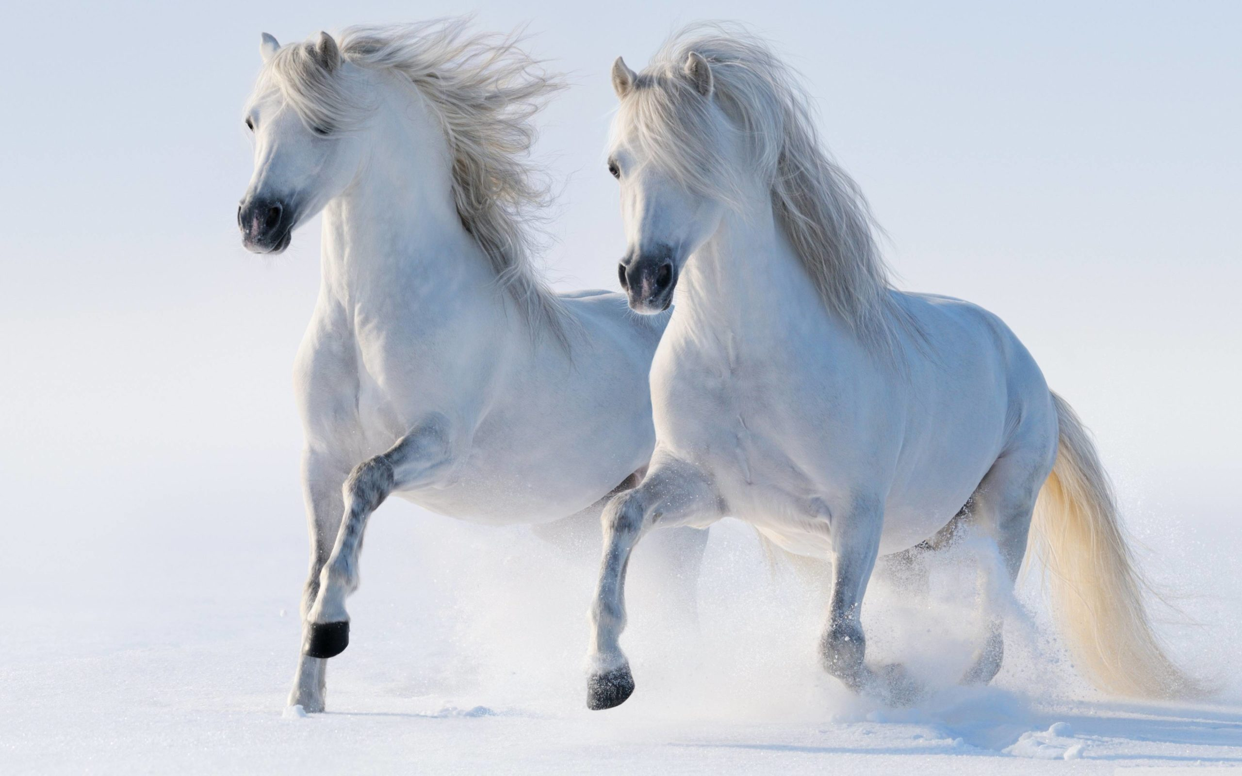 cool horse wallpapers