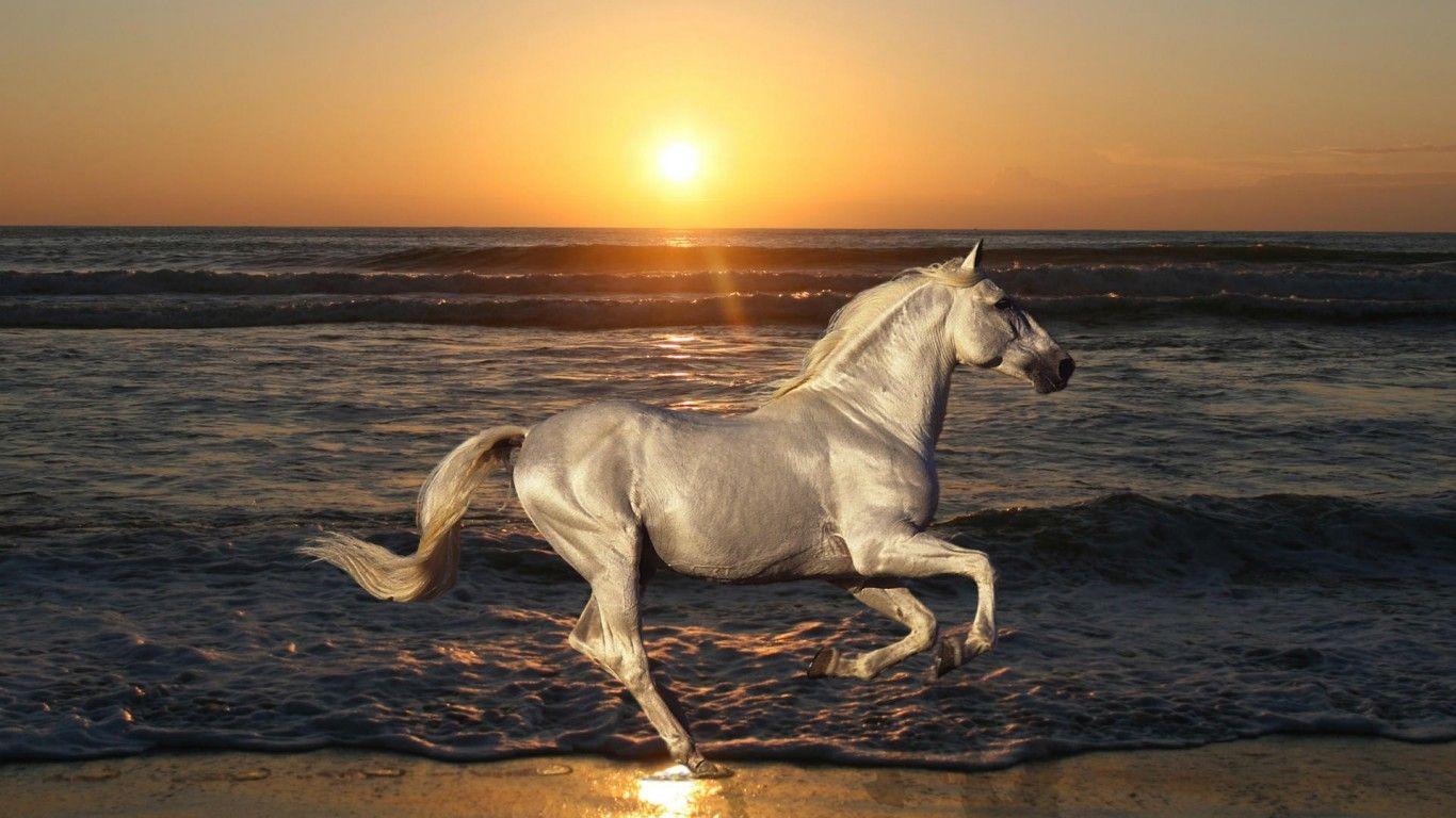 horse download