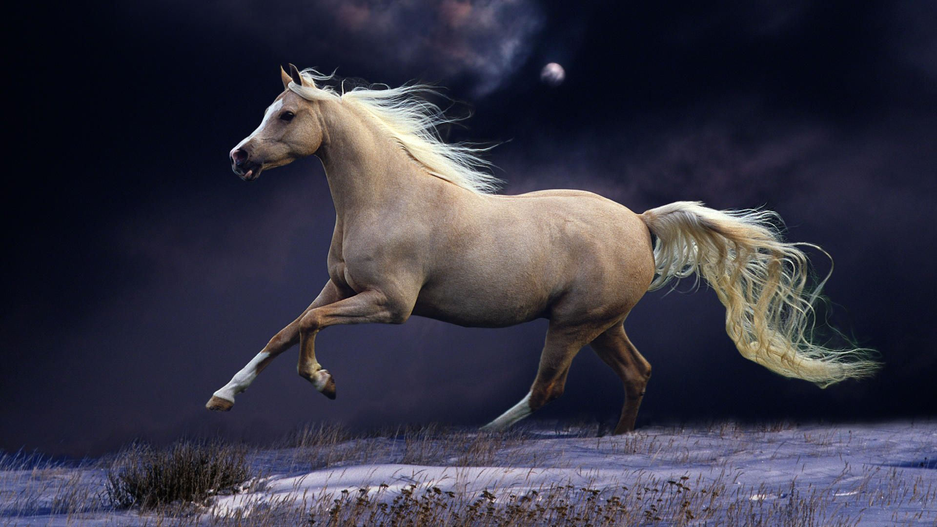 free horses wallpapers