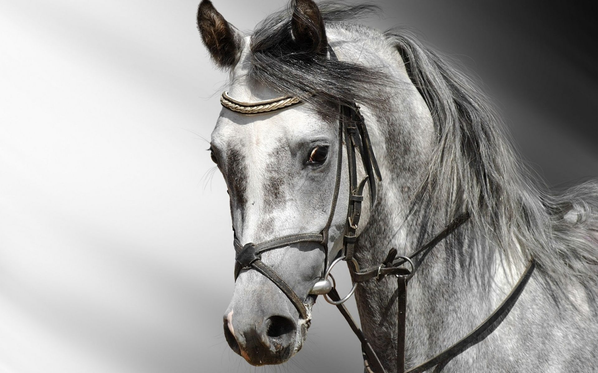free horse wall paper