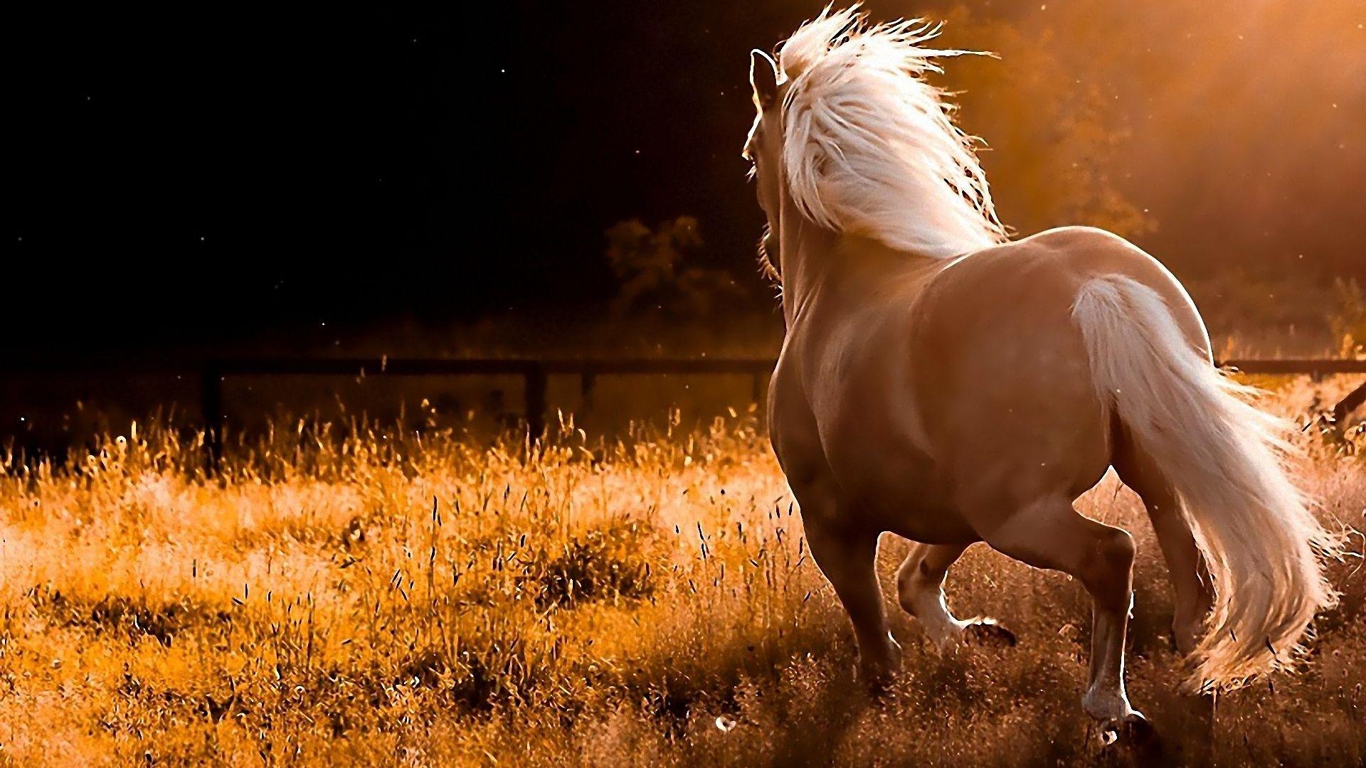free wallpaper horses