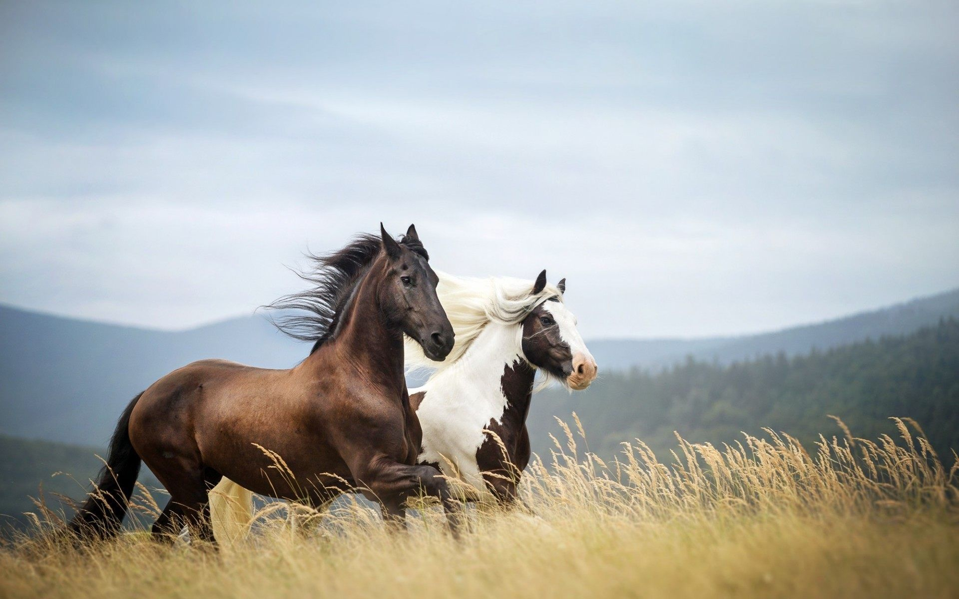 high definition horse wallpapers