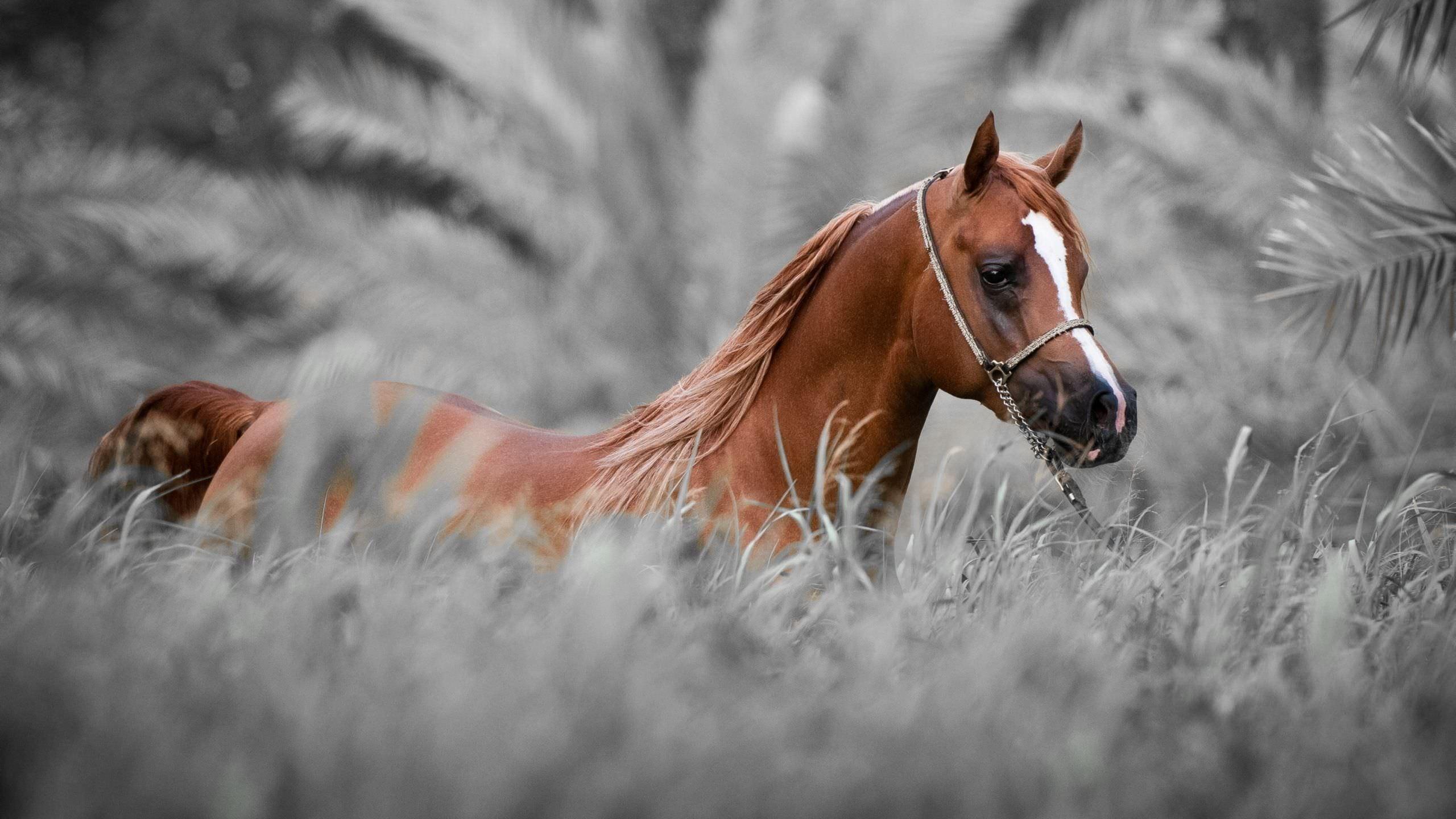 horse desktop backgrounds