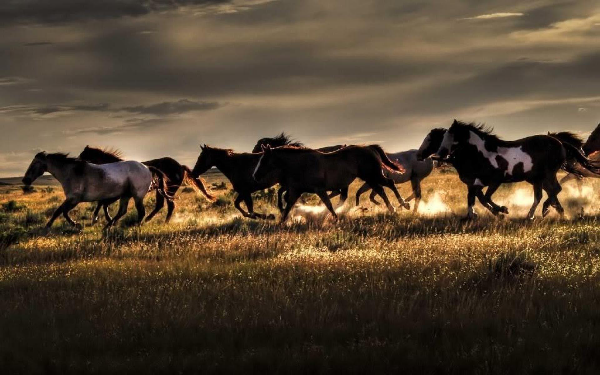 horse screensavers