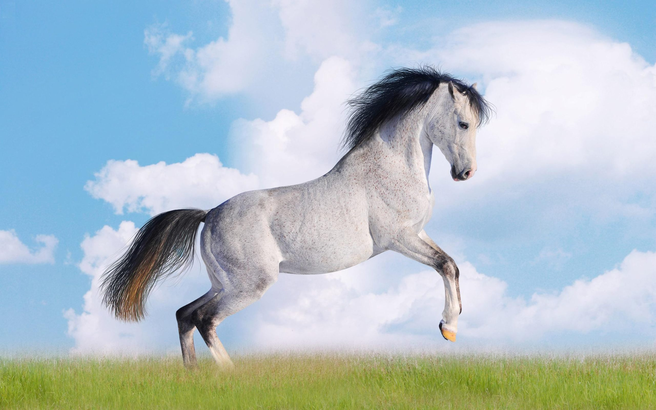 horse desktop wallpaper