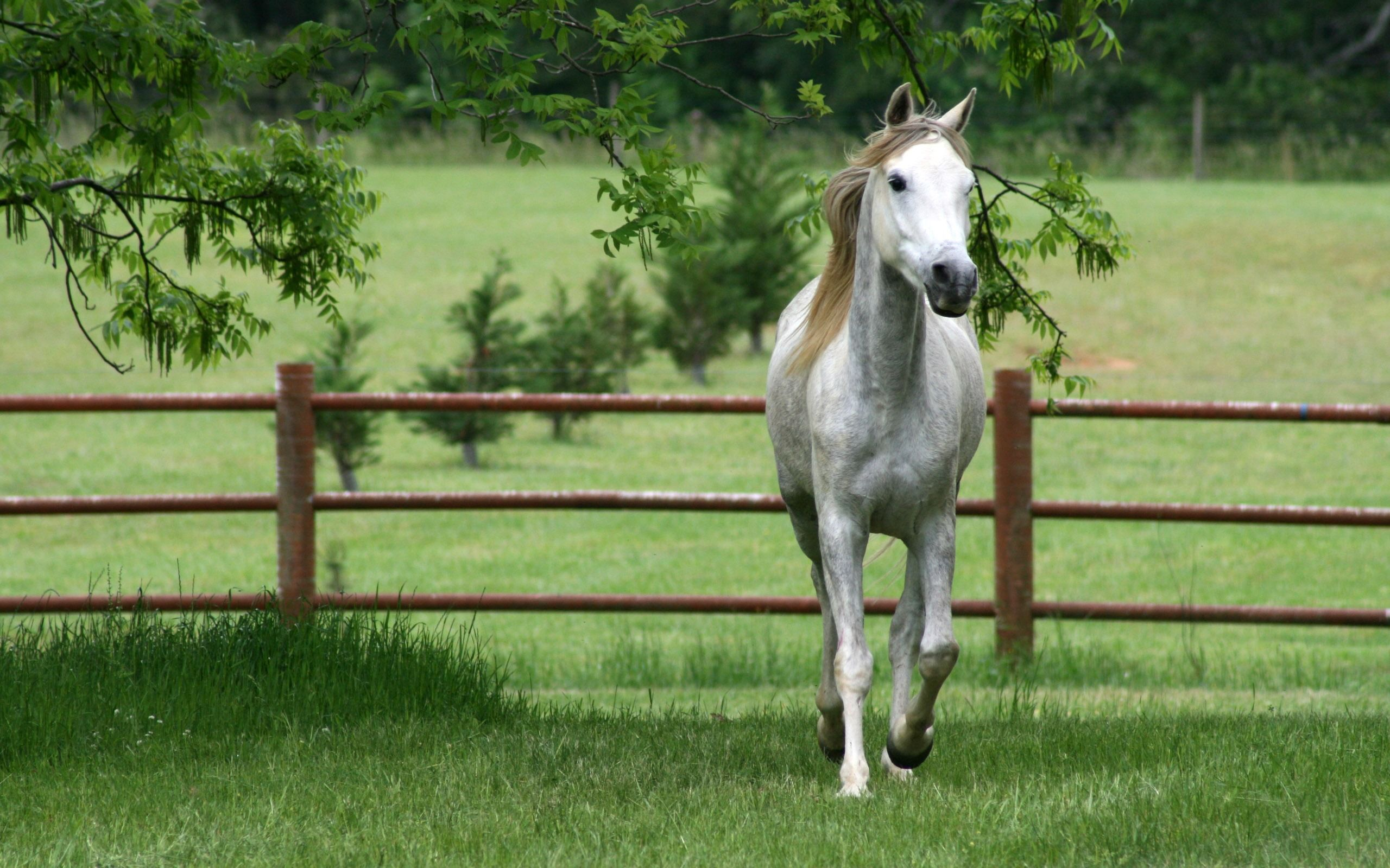 horse images wallpaper
