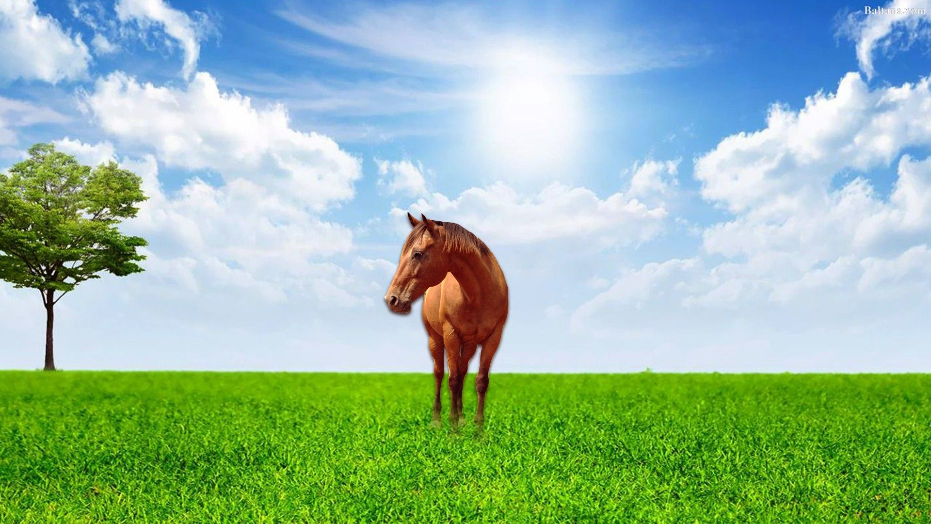 horse wallpaper free download