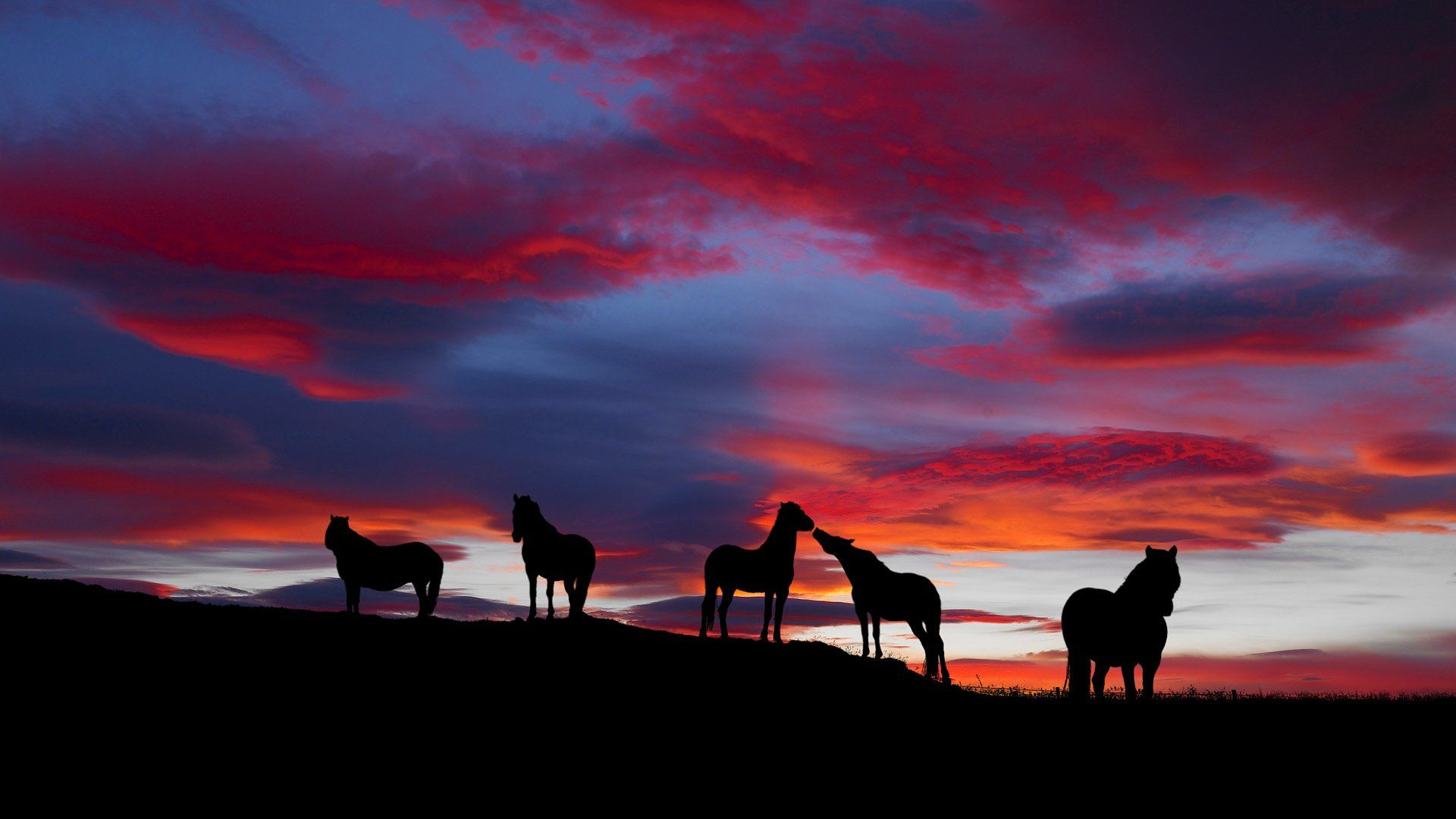 horse pictures wallpaper