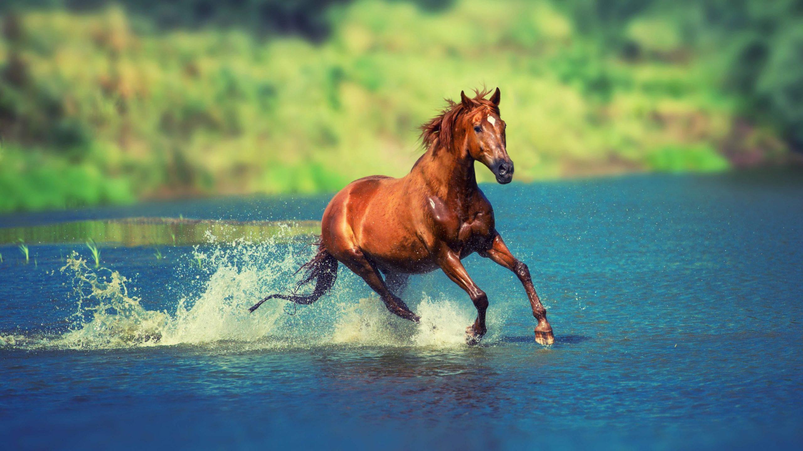 running horse wallpaper