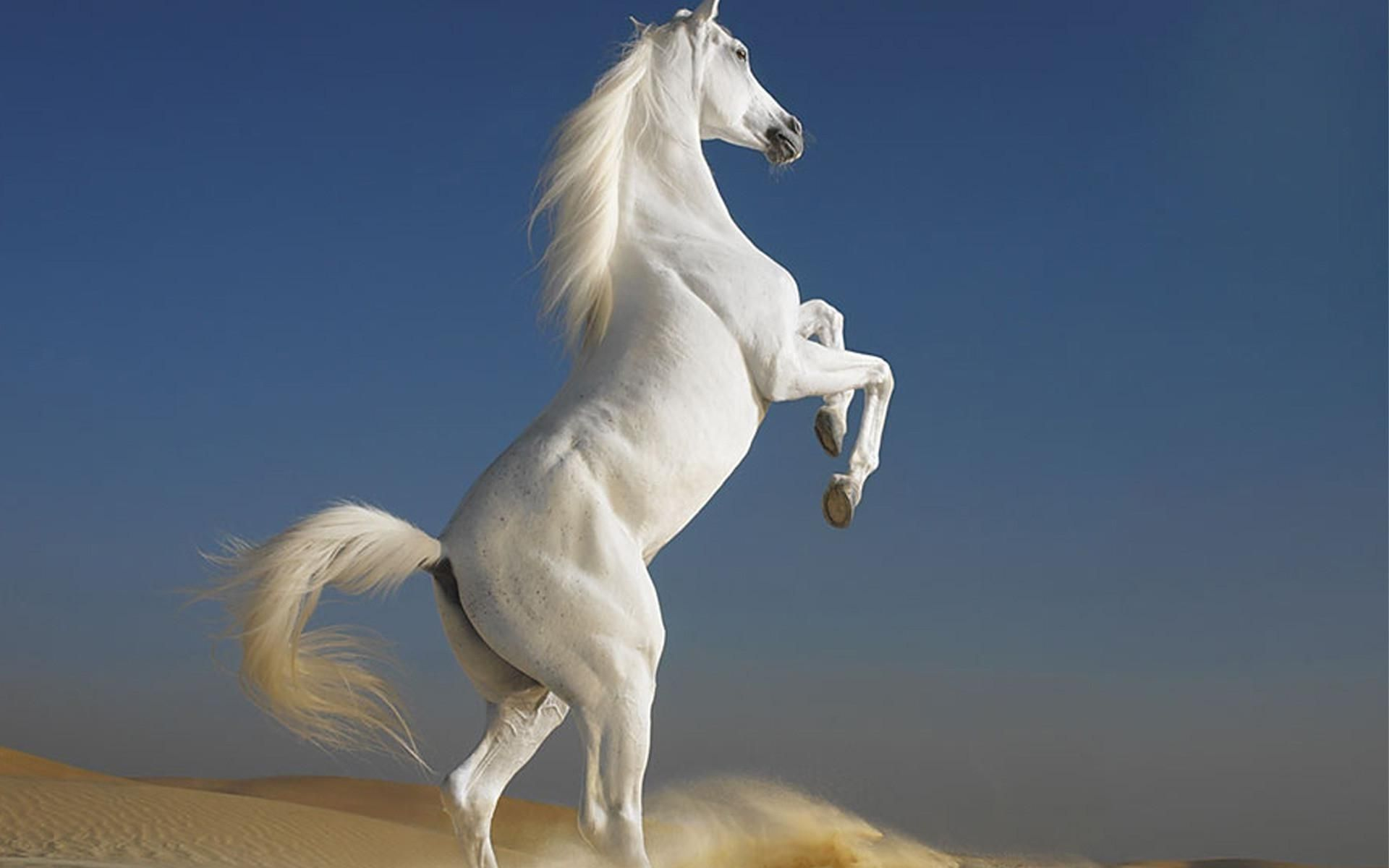 horse backgrounds for computer