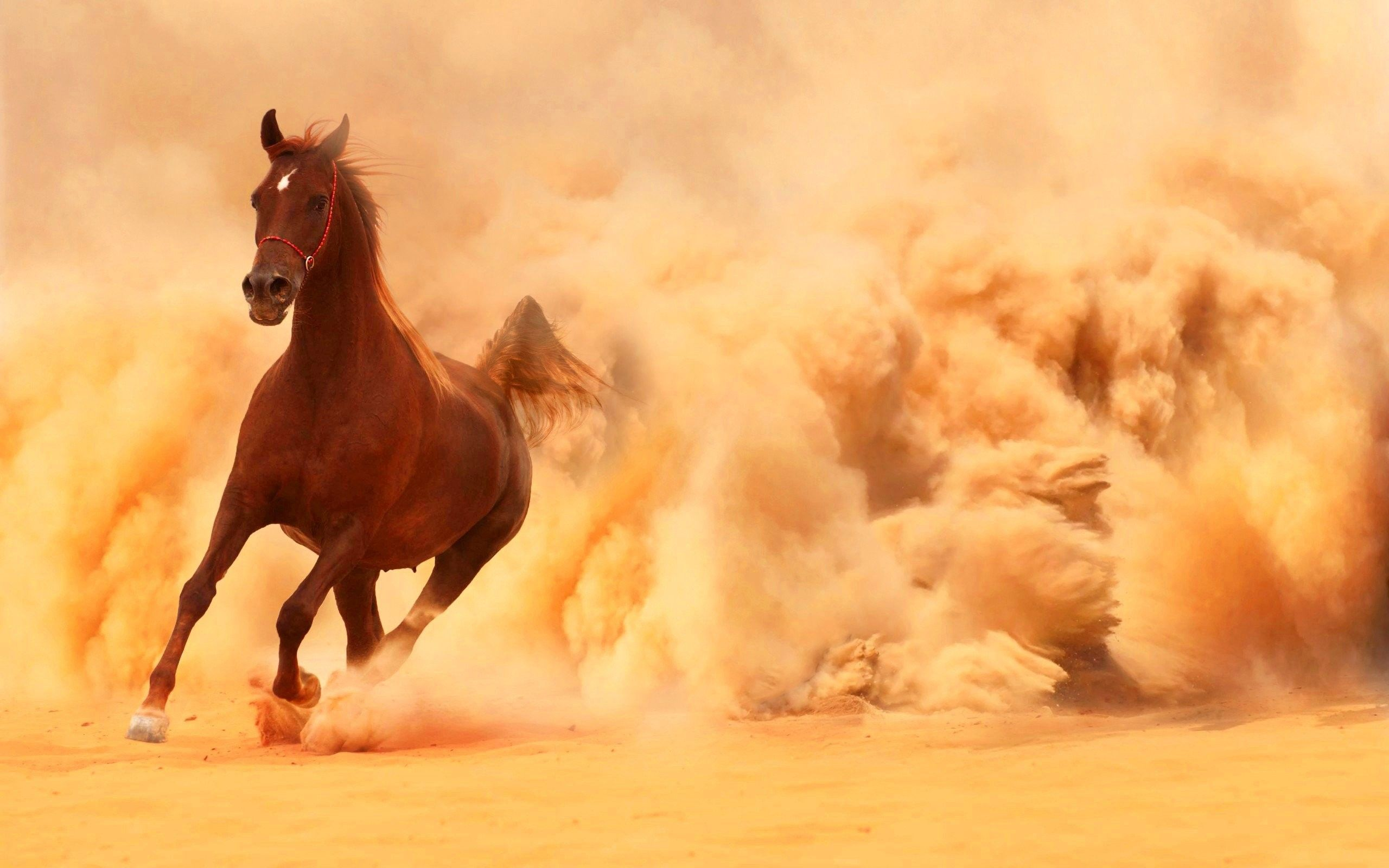 beautiful horses pictures wallpapers
