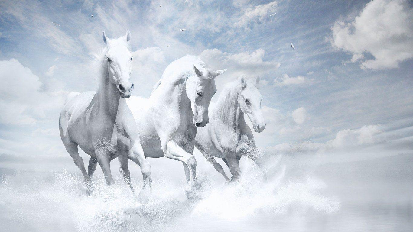 horses wallpaper free download