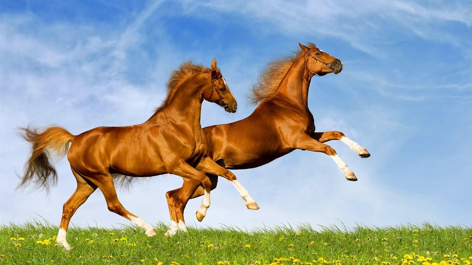 horse computer backgrounds