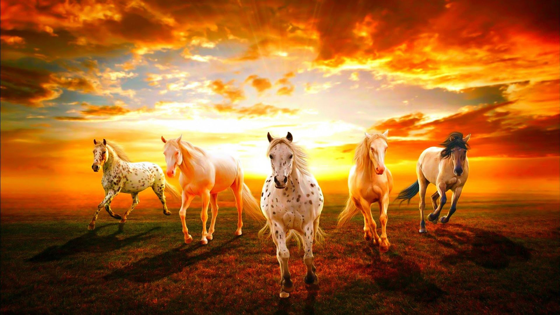 horse hd wallpapers 1080p