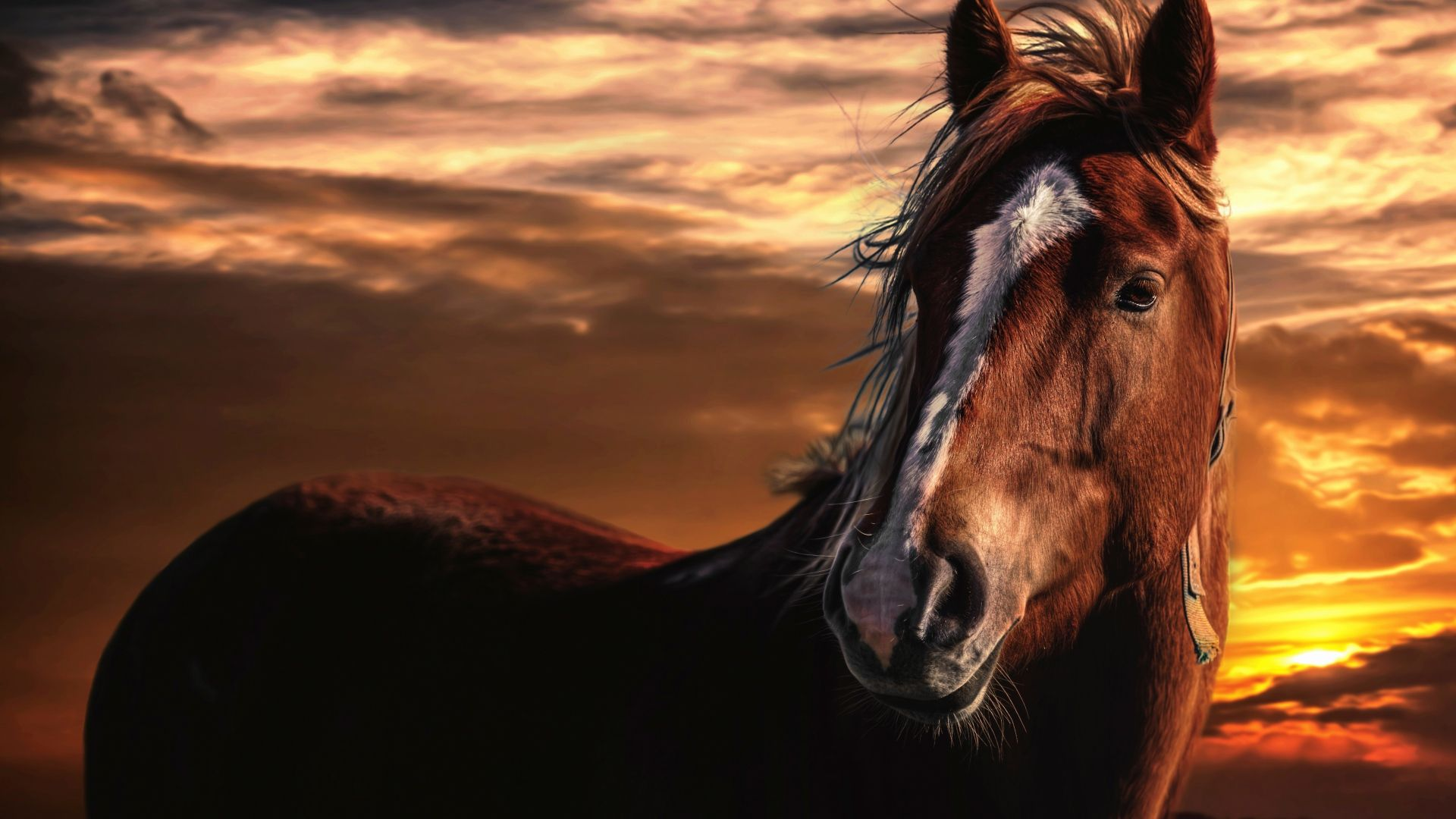 horse computer background hd wallpapers